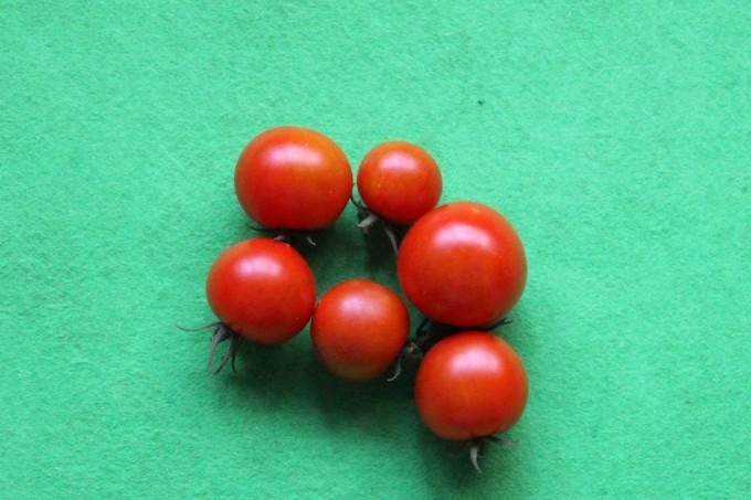 20150806収穫トマト