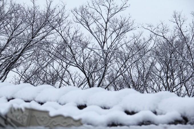 高知市、降雪