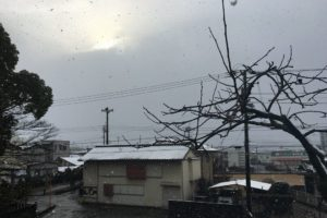 高知市の雪降り