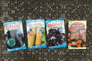 2016菜園育苗種