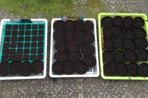 2016菜園、とうもろこし、枝豆