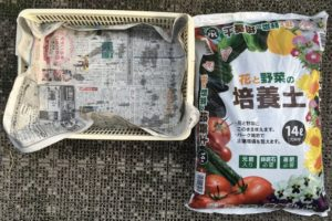2016菜園、枝豆育苗