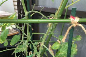 ベランダ栽培アイコ