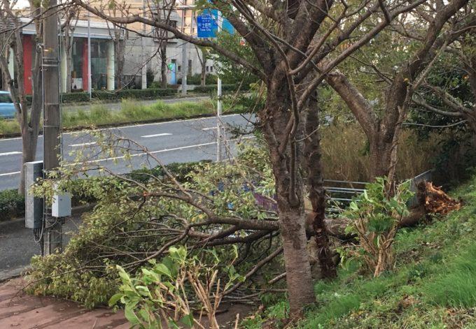 台風21号、倒れた木