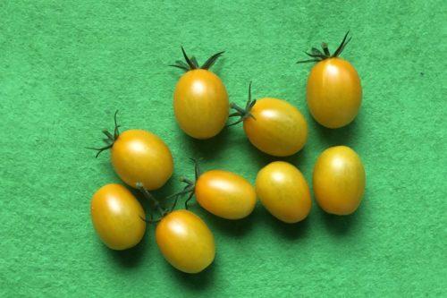 不織布プランター、ミニトマト