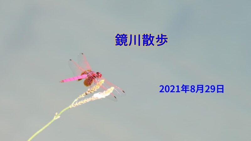鏡川散歩、20210829