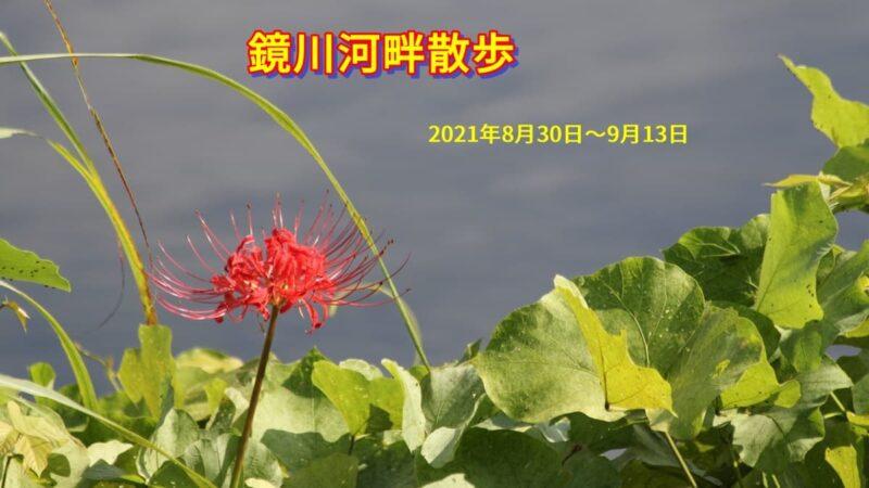 202108300913鏡川河畔散歩
